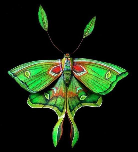 Badass Butterfly 3