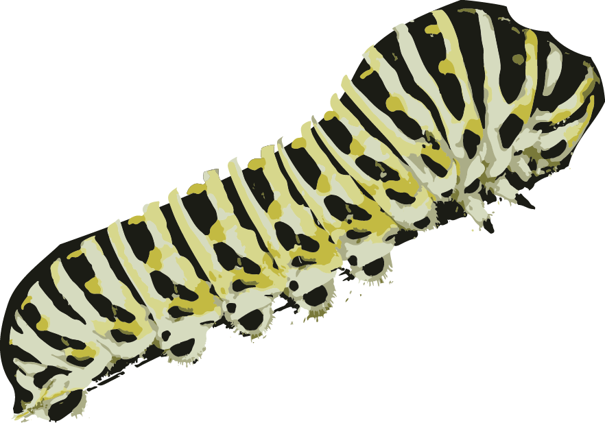 Caterpillar preparing to transform