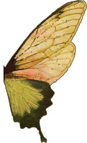 Badass Butterfly Right Wing